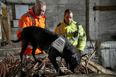 DNA Dog Jazz Continues To Sniff Out Crime