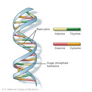 SelectaDNA-konsepti