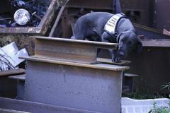 Le premier chien au monde entrainé à détecter l'ADN de SELECTA sur les métaux