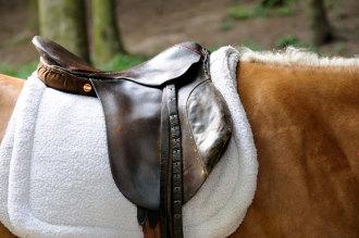 SelectaDNA Kit Equestre